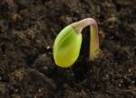 seed-germinating