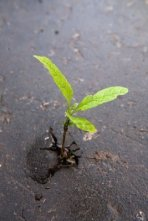 sprout in asphalt