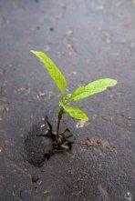 sprout in asphalt